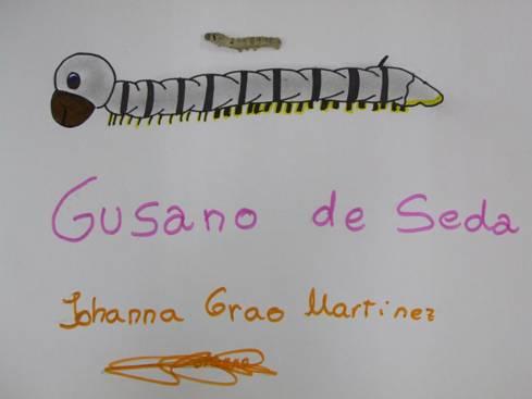El taller de: Gusano de Seda.