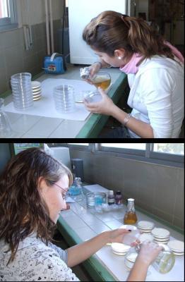 Preparación de placas Petri con medio LURIA
