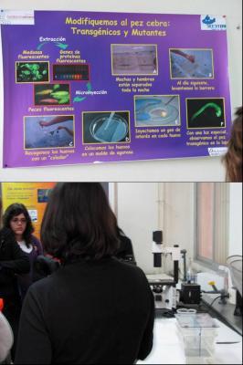 Pez Cebra y Biomedicina
